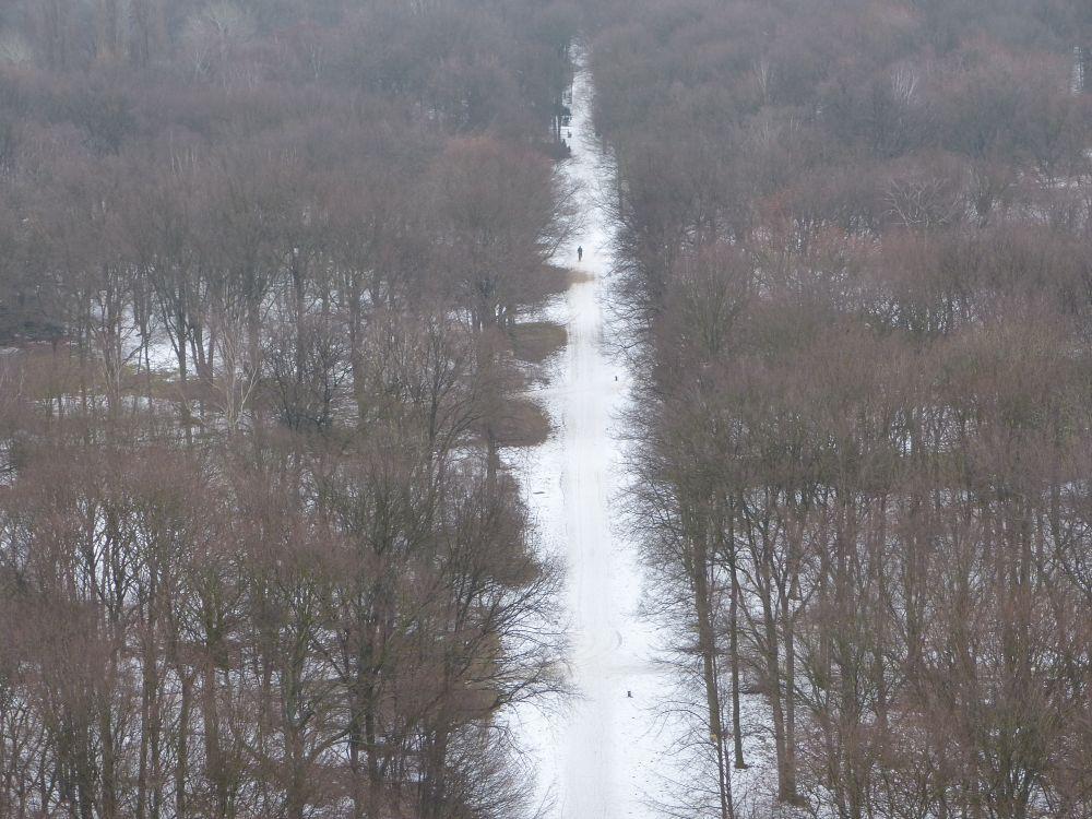 Blick in den verschneiten Tiergarten