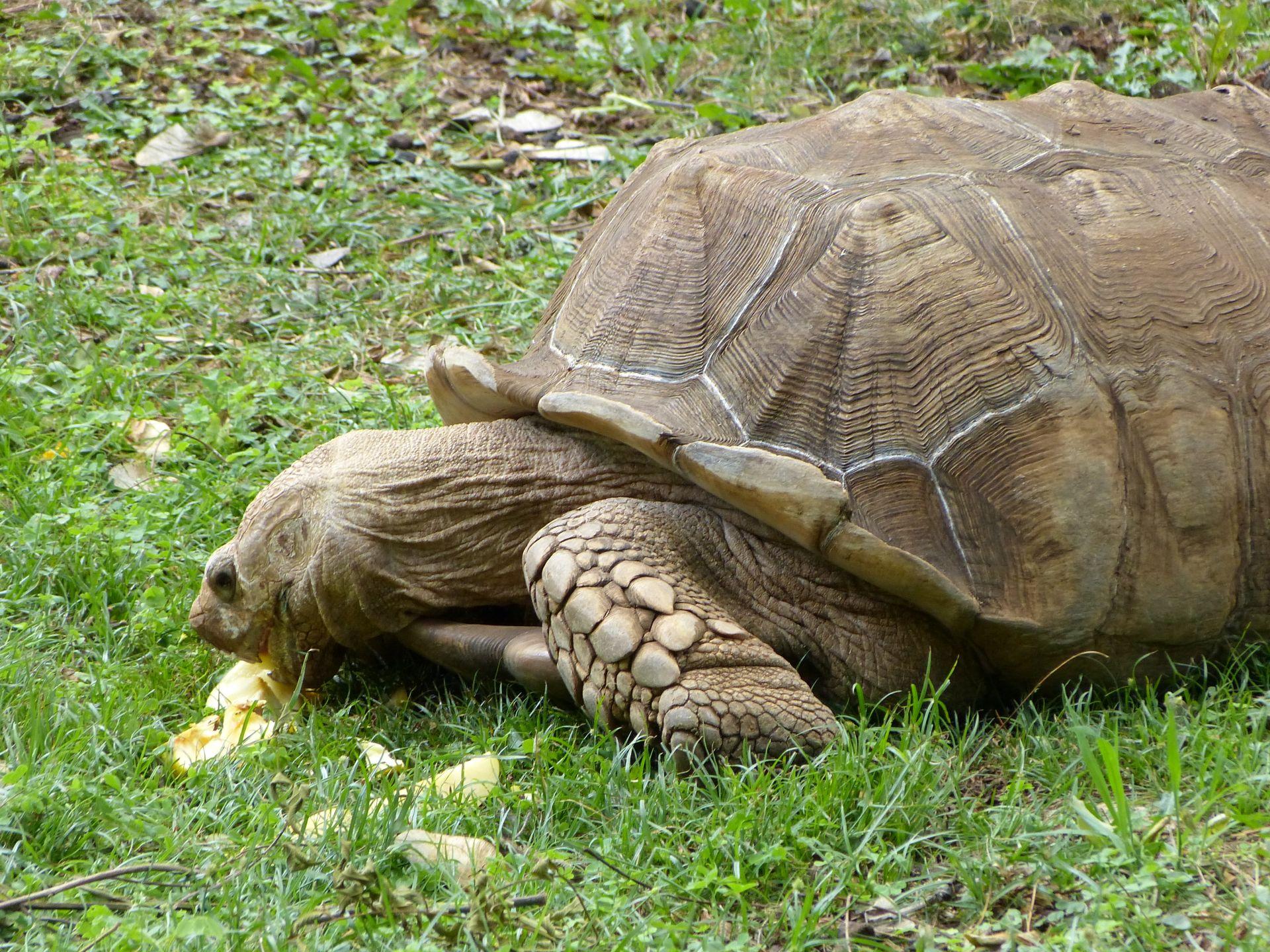 Was macht eine Schildkröte im Parque dos Loiros?