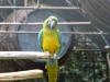Papagei im Parque dos Loiros