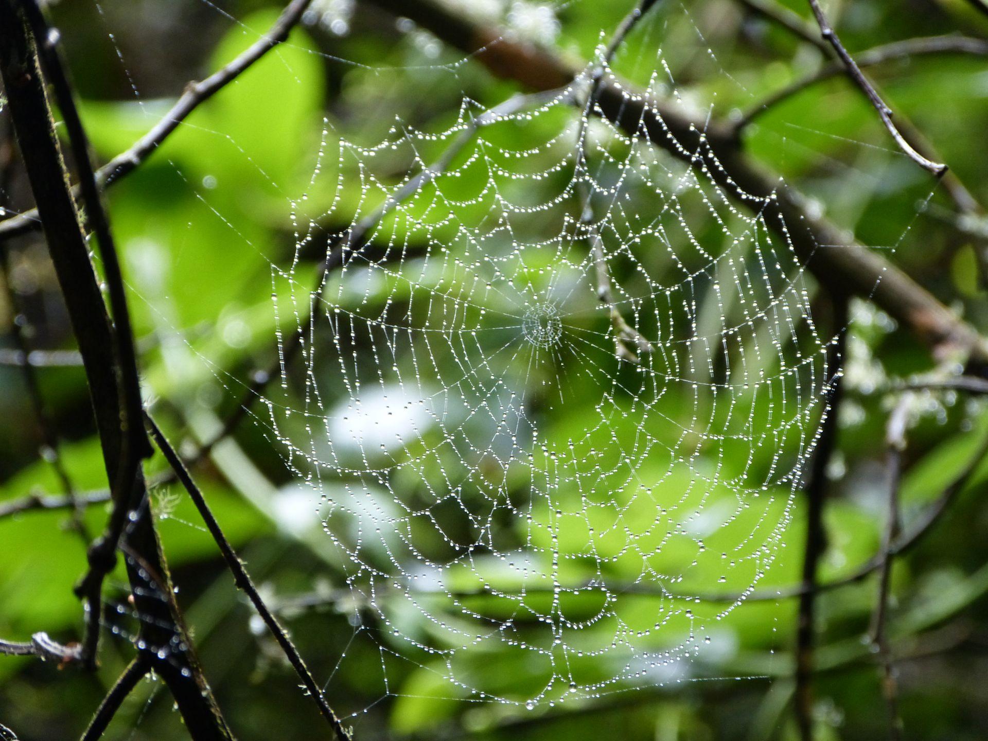 Spinnen gibt es auch hier