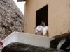 Dieser Katze geht es richtig gut!