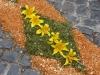 Blumenfest in Ribeira Brava