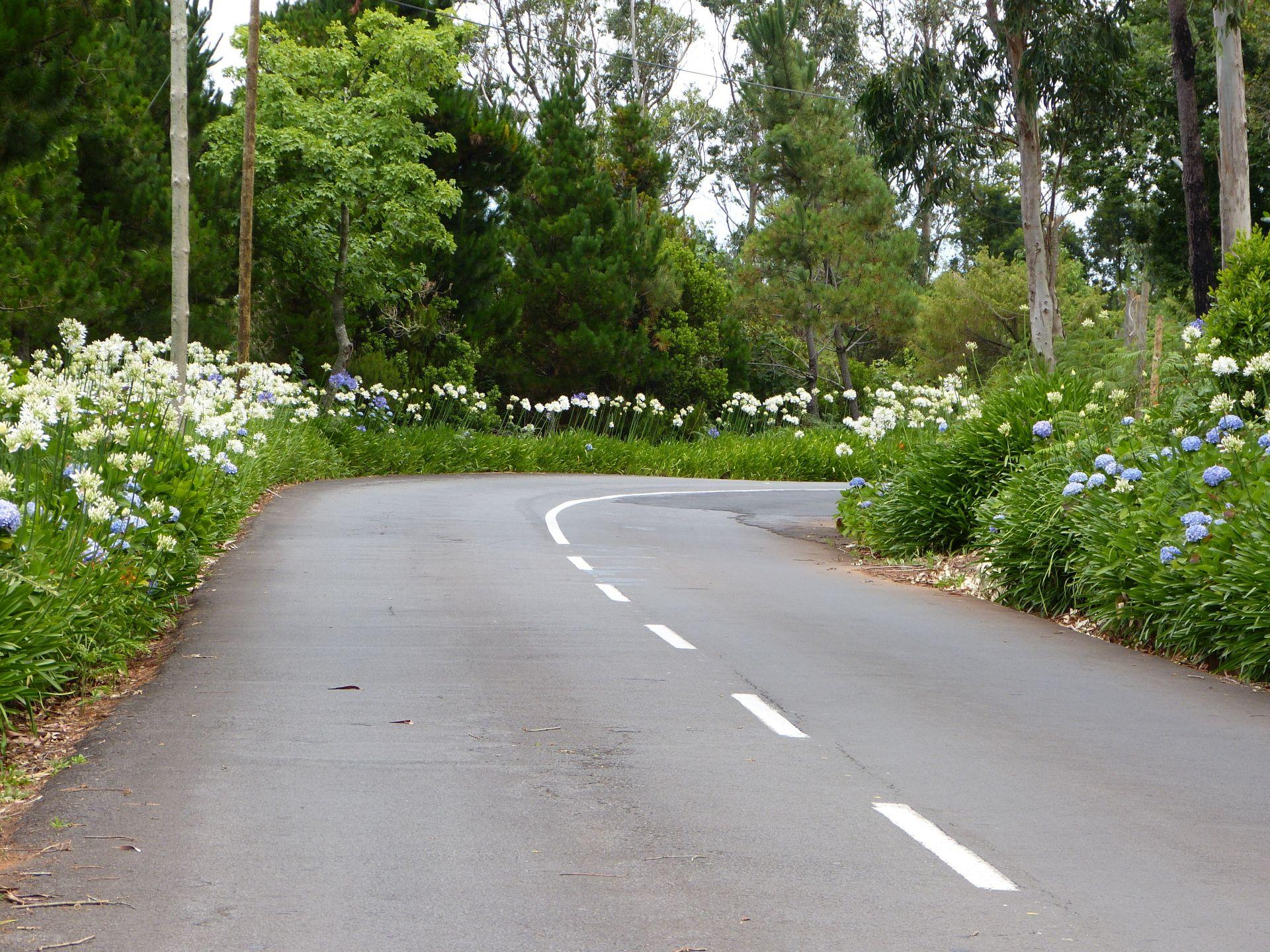 Typische Straße in Madeira mit Schmucklilien