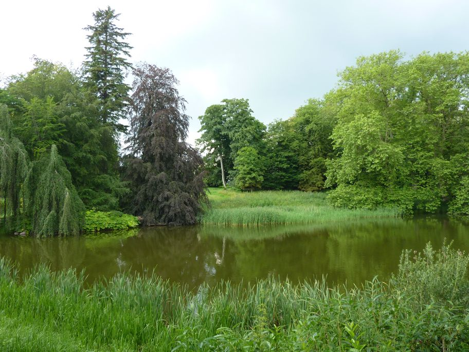 Viele schöne Bäume