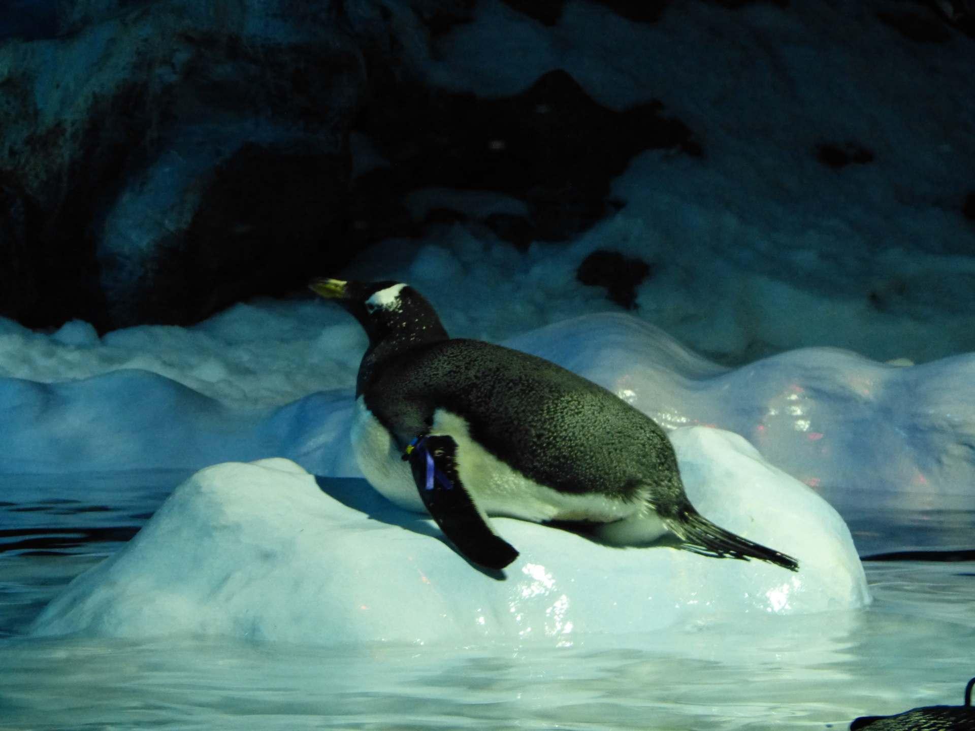 Die Pinguine fühlen sich wohl