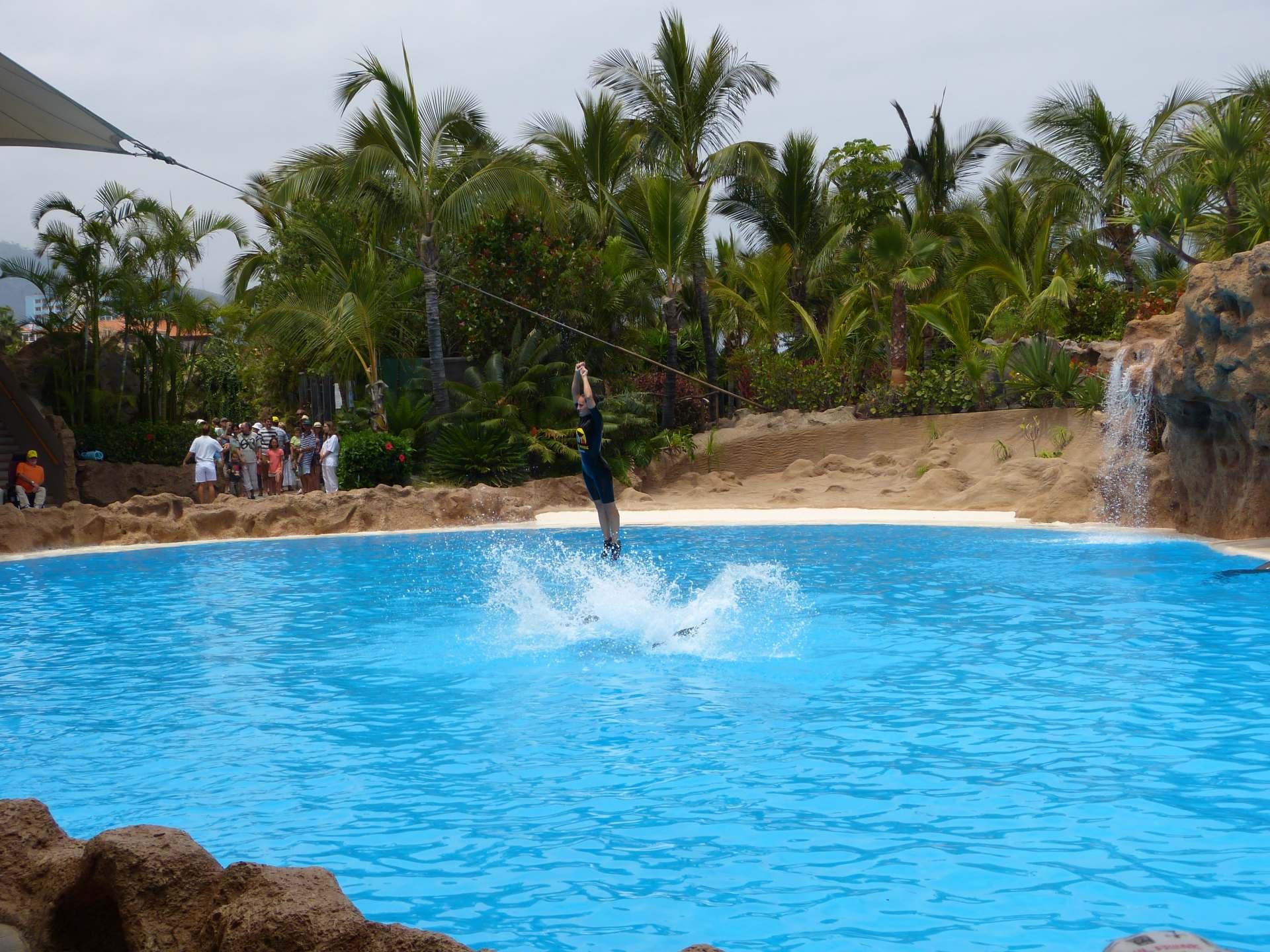 Action im Delphinbecken