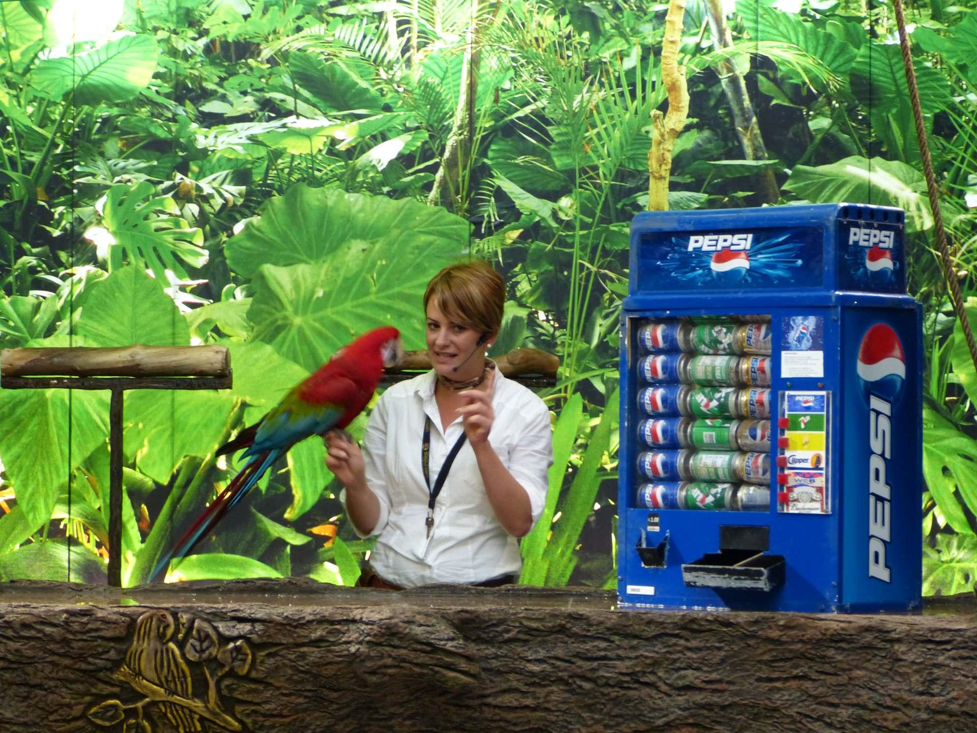 Auch die Papageien haben ihre Show