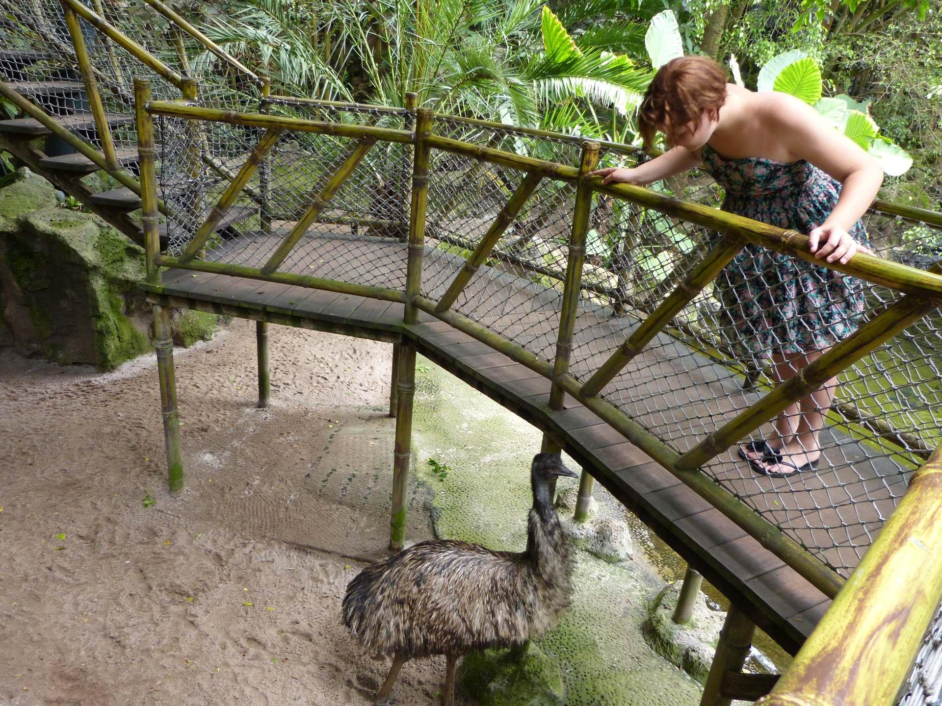 Über dem Emu