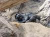 Gorilla beim Mittagsschlaf