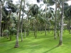 Palmenwiese