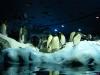 Pinguinarium mit richtigem Eis