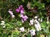 Ein paar Orchideen