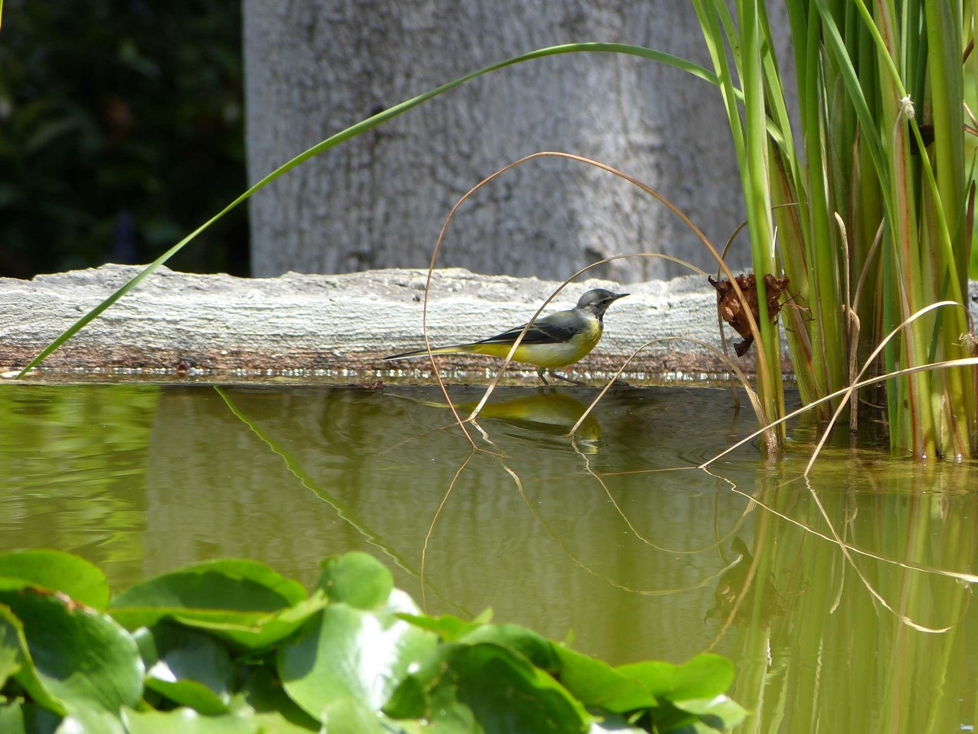 Eins meiner Lieblingsbilder vom Jardin Botanico