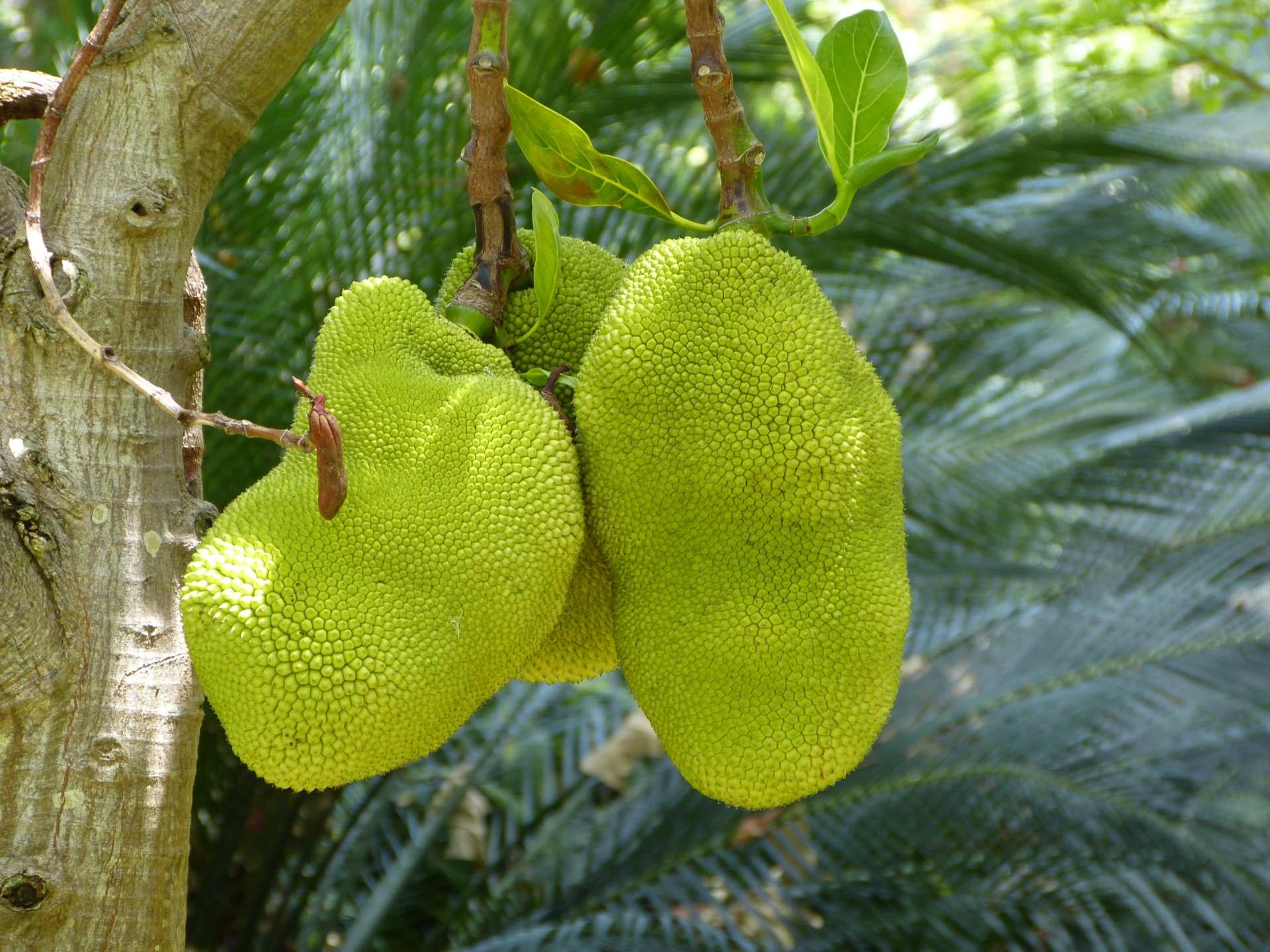 Verbotene Früchte?