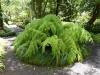 Eindrücke vom Jardin Botanico: Ein Riesenfarn