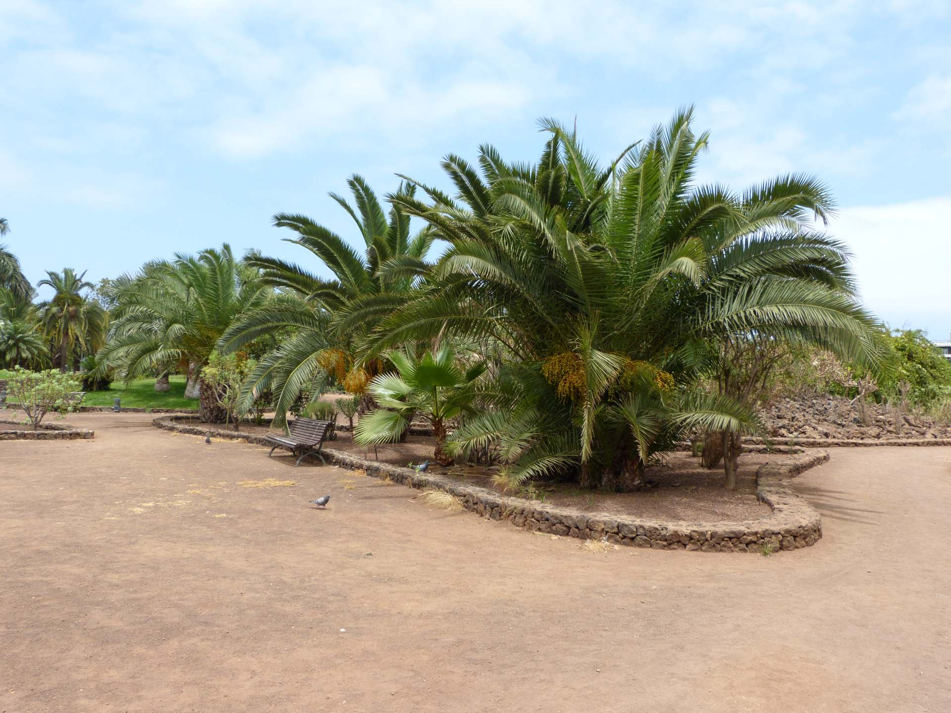 Oberer, ebener Teil des Taoro Parque