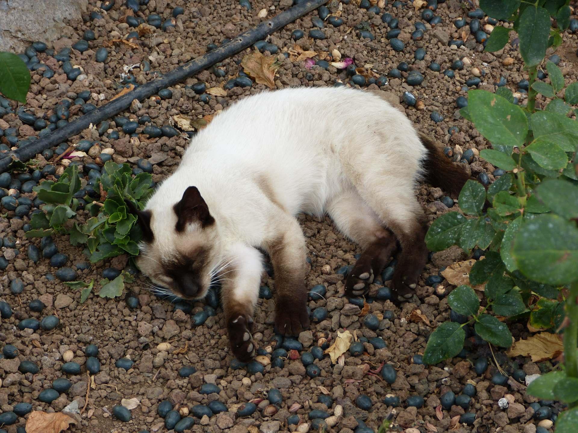 Auch Katzen halten Siesta
