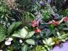 Bauernmarkt in Tacoronte - Blumen gibt es hier auch