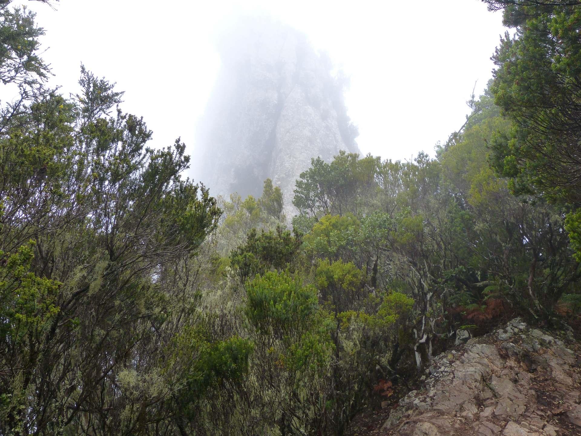 Chinobre: Leider noch im Nebel