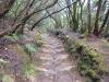 Ein richtiger Märchenwald